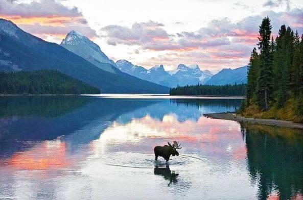 moose pass - summit lake lodge