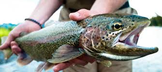 Photo Courtesy of Kenai Riverside Fishing