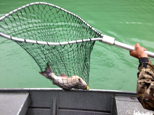 fish up in net