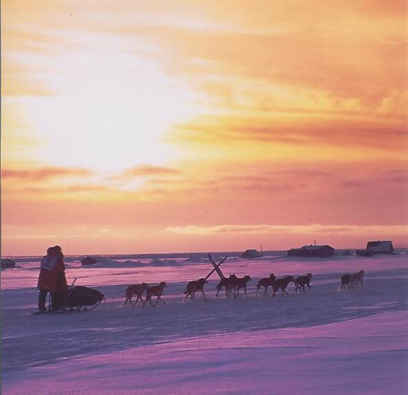Danny Seavy, Photo From Seavey's IdidaRide Sled Dog Tours Facebook Page