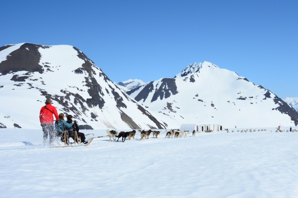Winter Sled Dog Tour