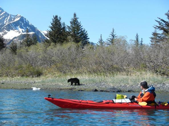 Photo from Kayak Adventures Worldwide in Seward, AK.