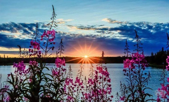 Beautiful fireweed in front of Lake Parsons, Nikiski, Alaska. Photo from RMEVET Photography.