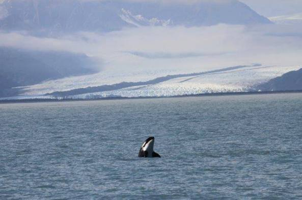 Photo from Kenai Fjords Tours.