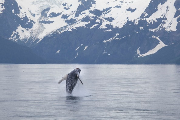 Photo from www.sarashoemakerlind.com in Kenai Fjords National Park.