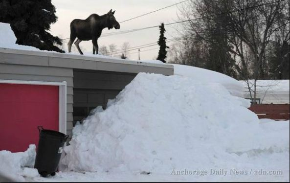 Photo from Anchorage Daily News.