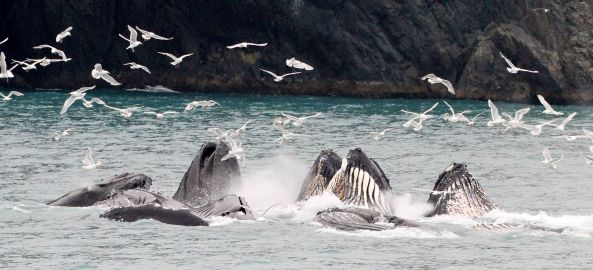 Photo from Kenai Fjords Tours Facebook page.