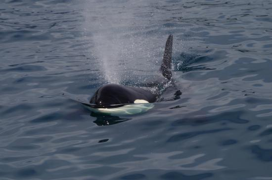 Video from Eric Eberspeaker. Photo from Kenai Fjords Tours.