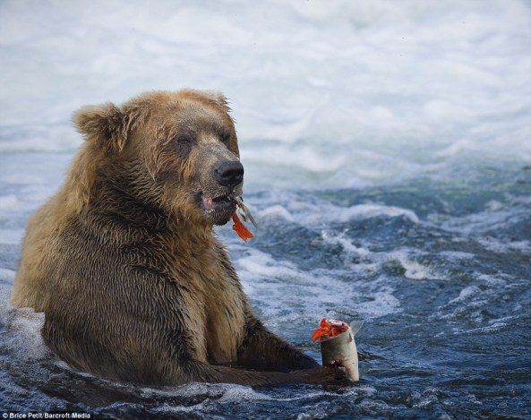 Photo in Katmai National Park, credit tagged on photo.