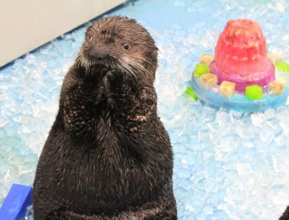 Photo from the Alaska SeaLife Center in Seward, AK.