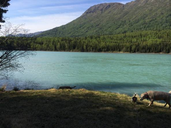cooper landing bbw personals Latest local news for cooper landing, ak : local news for cooper landing, ak continually updated from thousands of sources on the web.