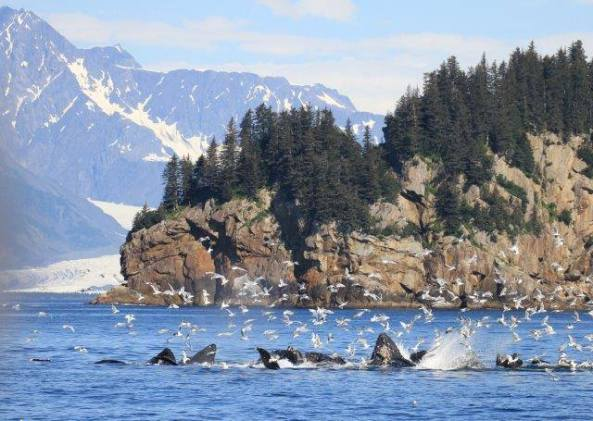 Photo from Kenai Fjords Tours in Seward, Alaska.