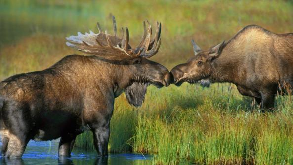Photo from www.Alaska-In-Pictures.com