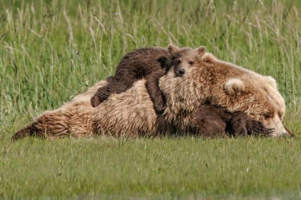 """""""Bear Backpack!"""" Photo from Kathleen Turner."""