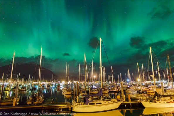 Photo Credit: Ron Neibrugge with www.wildnatureimages.com. Taken in Seward, AK.