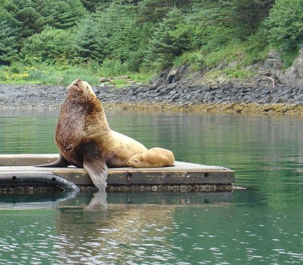 Photo from www.kodiakislandadventures.com.
