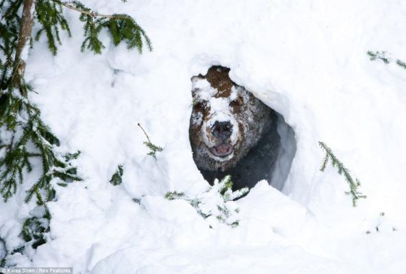 Photo shared from The Alaska Life