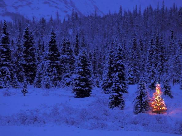 PC: The Alaska Life